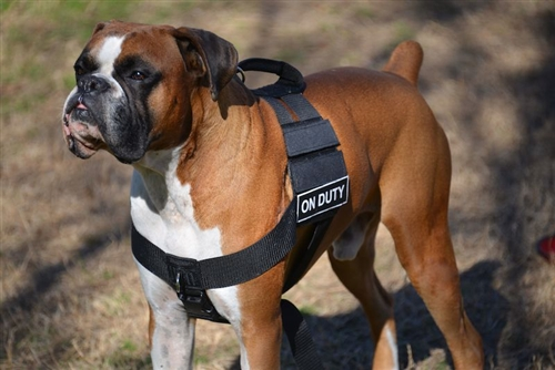 Dt Cobra Harness No Pull Dog Harness With Cobra Buckle