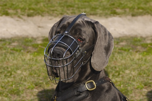 Metal Dog Collars For Training Dogs Acceptable