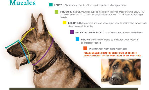 How to Measure for a Muzzle