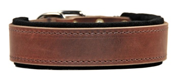 D&T Delight | Padded Leather Dog Collar