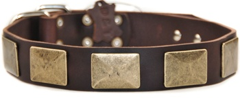 Brass Plate | Leather Dog Collar