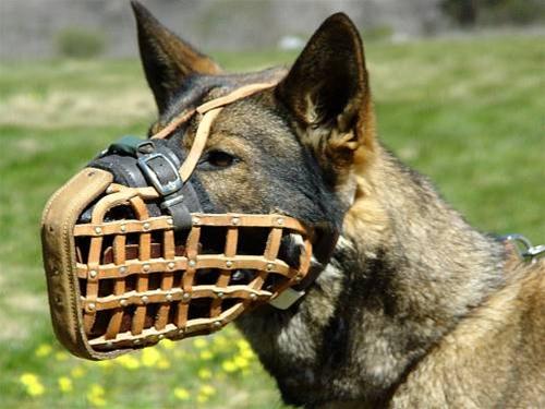 muzzle basket